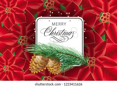 Merry Christmas greeting card design. Inscription in white frame with cons and fir tree branch on background with poinsettia flowers. Can be used for posters, postcards, greetings