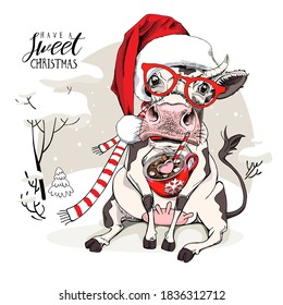 Merry Christmas and New year card. Sitting smiling cow in the red scarf and Santa's hat with the cup of coffee. Humor t-shirt composition, meme, hand drawn style print. Vector illustration.