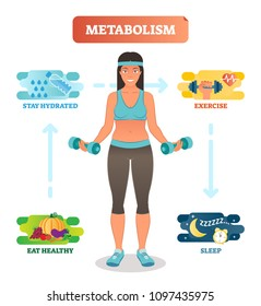 Metabolism concept vector illustration diagram, biochemical body cycle. Eating healthy, drinking water, exercising and sleeping well. Human wellbeing poster.