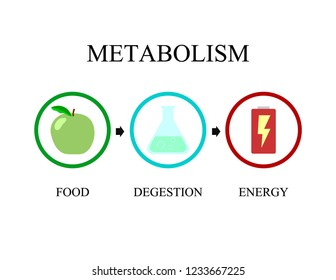 Metabolism icon vector