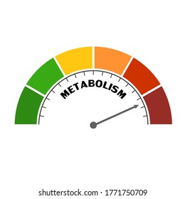 Metabolism level scale with arrow. The measuring device icon. Sign tachometer, speedometer, indicators. Infographic gauge element.