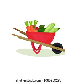 Metal wheelbarrow full of ripe vegetables. Natural and tasty food. Organic farm products. Flat vector design