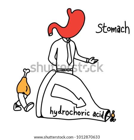 Metaphor Function Stomach Use Hydrochloric Acid Stock Vector ...