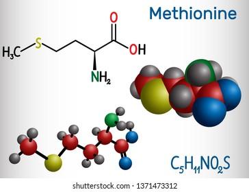 Methionine (l- methionine, Met , M) essential amino acid molecule.  Structural chemical formula and molecule model. Vector illustration
