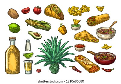 Mexican traditional food and drink set. Tequila, Guacamole, Quesadilla, Enchilada, Burrito, Tacos, Nachos, chili con carne with ingredient. Vector vintage color engraving isolated on white