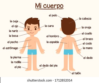 Mi Cuerpo (My Body), human body parts diagram in Spanish for language learning. Cute cartoon boy with labels, infographic chart for kids.