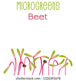 Microgreens Beet. Seed packaging design. Sprouting seeds of a plant. Vitamin supplement, vegan food