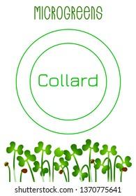 Microgreens Collard. Seed packaging design. Vitamin supplement, vegan food