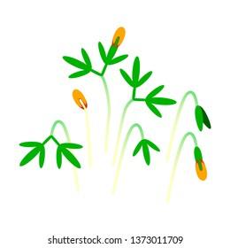 Microgreens Cress. Bunch of plants. Vitamin supplement, vegan food