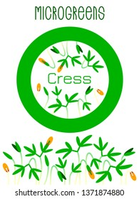 Microgreens Cress. Seed packaging design, round element in the center. Sprouting seeds of a plant. Vitamin supplement, vegan food