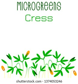 Microgreens Cress. Seed packaging design. Sprouting seeds of a plant. Vitamin supplement, vegan food