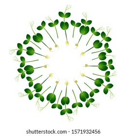 Microgreens Pea. Arranged in a circle. White background