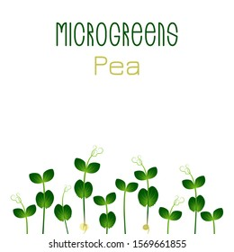 Microgreens Pea. Seed packaging design. Sprouting seeds of a plant