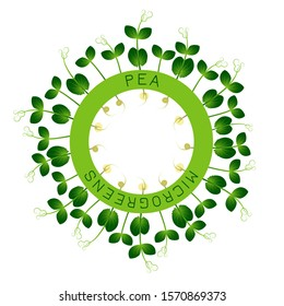 Microgreens Pea. Seed packaging design, round element in the center. Around him sprouts