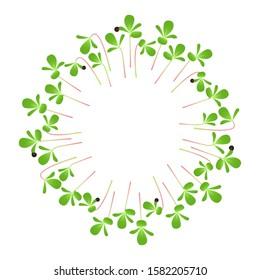Microgreens Purslane. Arranged in a circle. White background