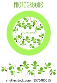Microgreens Purslane. Seed packaging design, round element in the center. Sprouting seeds of a plant