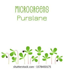 Microgreens Purslane. Seed packaging design. Sprouting seeds of a plant