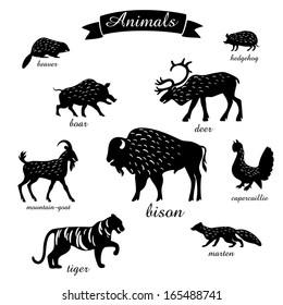 midland animals