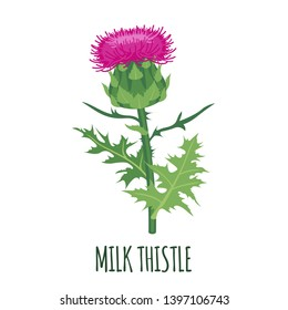 Milk Thistle flower icon in flat style isolated on white background. Superfood thistle medical herb. Vector illustration.