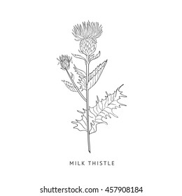 Milk Thistle Hand Drawn Realistic Sketch