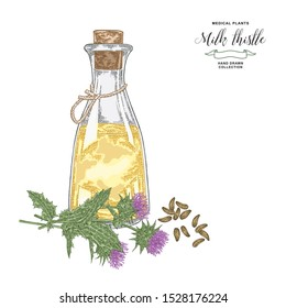 Milk thistle oil hand drawn. Thistle flowers and seeds with glass bottle. Medicinal gerbs collection. Vector illustration botanical.