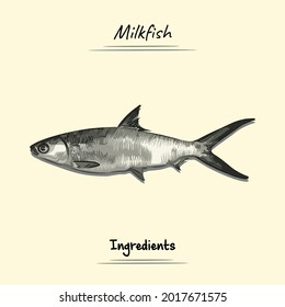 Milkfish Illustration Sketch And Vector Style. Good to use for restaurant menu, Food recipe book and food ingredients content.