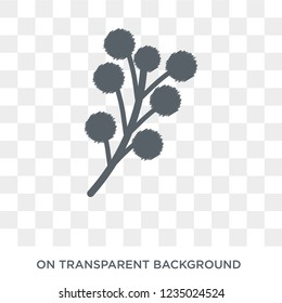 Mimosa icon. Trendy flat vector Mimosa icon on transparent background from nature collection.