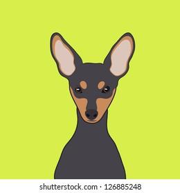Miniature Pinscher, The buddy dog