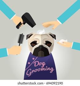Miniature pinscher  getting groomed at pet grooming salon.