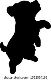 Miniature Schnauzer jumping side silhouette