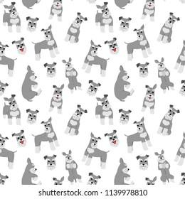 miniature schnauzer pattern,dog poses,dog breed