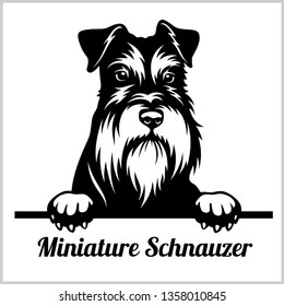 Miniature Schnauzer - Peeking Dogs - breed face head isolated on white - vector stock