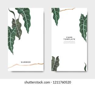 Minimalist botanical card template design, Alocasia Polly plant with golden line on white, pastel vintage theme
