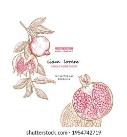 Minimalistic natural pomegranate fruit background, vector brand identity elements for package, card. Pomegranate plant branch with fruits. Hand drawn frame with sketch pomegranate with place for text.