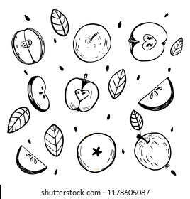 Minimalistic sketch of whole apples, cut apple. Black and white still life with details. Vector isolated hand drawn illustration. Use as coloring decor on kitchen sticker pattern symbol emblem element