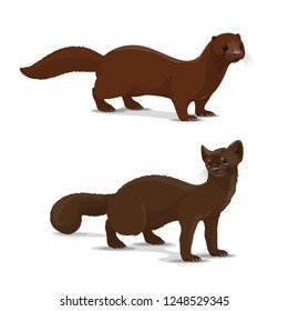 Mink and sable dark-colored carnivorous mammal icon. Wildlife vector animal with rich glossy brown coat that looks silky. European and american mink and sable, isolated hunting vector animal