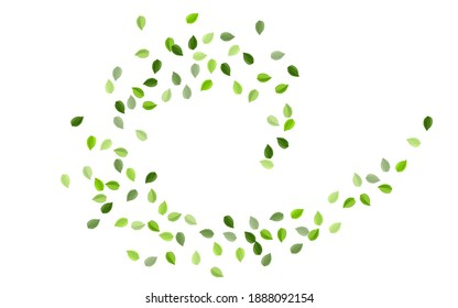 Mint Foliage Tea leaves Vector Backdrop. Realistic Leaf Concept. Lime Leaves Fly Pattern. Greens Wind Brochure.