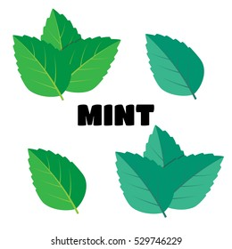 Mint green vector illustration set. Mint logo vector