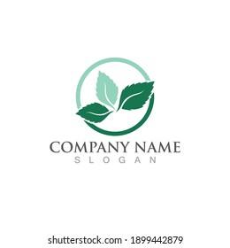 mint leaf green fresh logo design