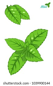 Mint leaf, peppermint green leaves set isolated on white background hand drawn sketch vector ilustration.
