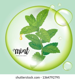 Mint leaves with dew drop in green bubble on background template. Vector set of element for advertising, banner, packaging design of peppermint products.