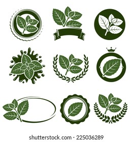 Mint leaves label set. Vector