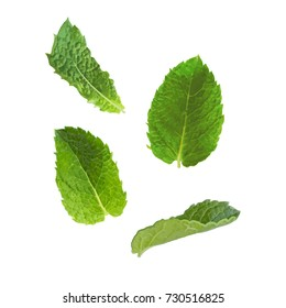 Mint leaves on a white background