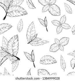 Mint leaves seamless pattern .Style ink sketch of mint. Isolated on white background. Hand drawn vector.spearmint plant and leaves. Herbal engraved illustration. melissa,peppermint,spearmint.
