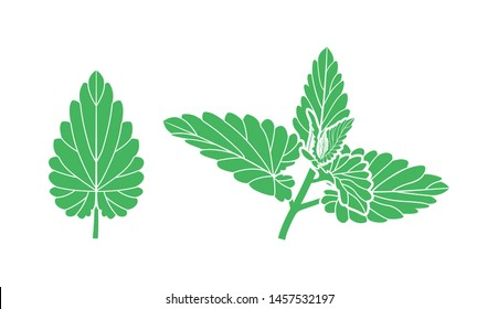 Mint logo. Isolated mint on white background