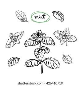 Mint Leaves Doodle Images Stock Photos Vectors Shutterstock