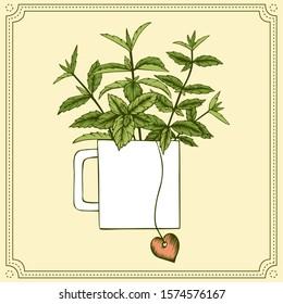 Mint tea. Hand drawn vector bunch of mint branches in tea cup with tea bag. Isolated on beige background