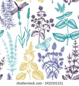 Mints and balms seamless pattern. Hand-sketched aromatic materials and medicinal herbs background. Herbal tea ingredients. Mint plants for cosmetics, perfumery, textile, wrapping, packaging, fabric.