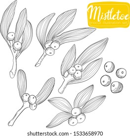 Mistletoe twig hand draw linocut vector illustration Christmas collection. Ilex branch art X-mas set in outline styles.  Holly berry collection in line art style