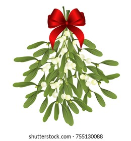 Mistletoe. Vector illustration of hanging mistletoe sprigs with red bow isolated on white background for Christmas cards and decorative design